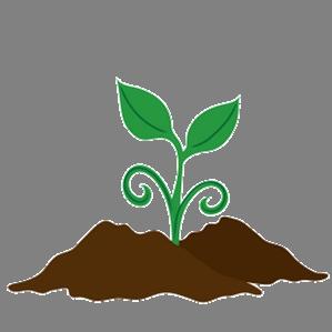 plant - no background